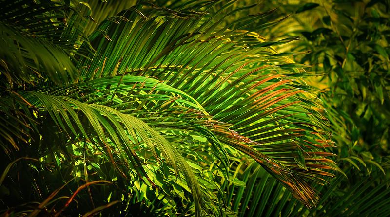 Leavces in the Light-054.jpg