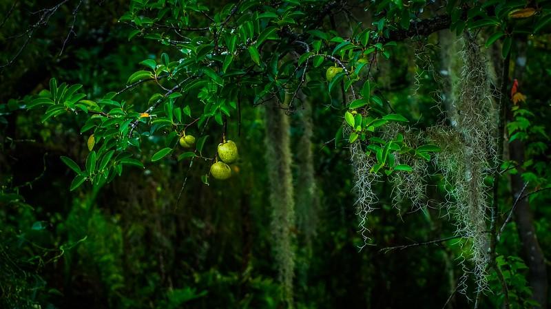 Leaves and Light-159.jpg