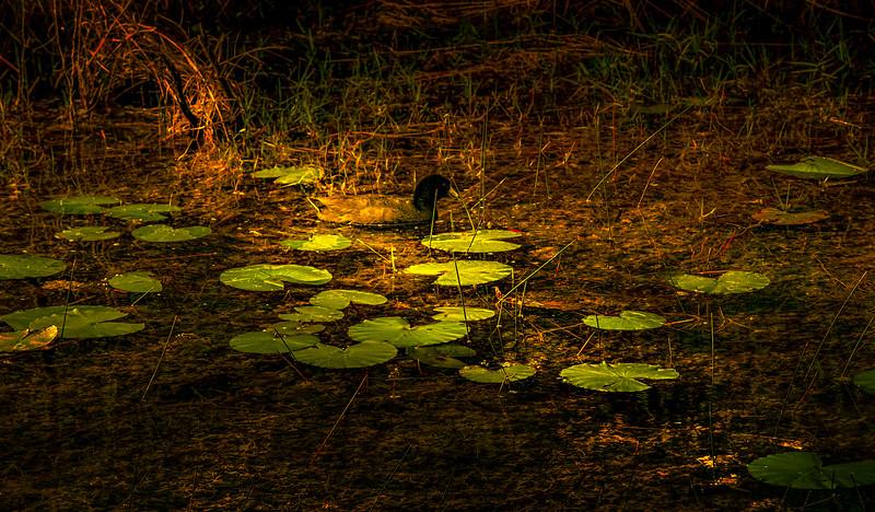 Leaves in the Light-058.jpg