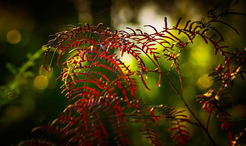 Leaves and Light-116.jpg