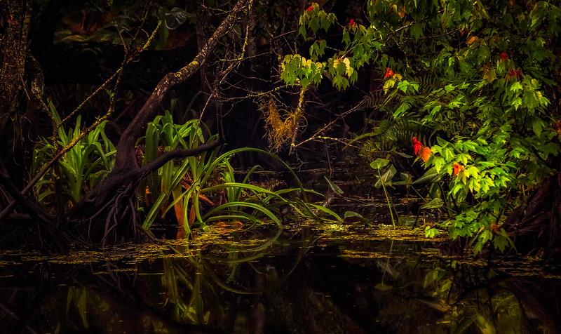 Leaves and Light-174.jpg