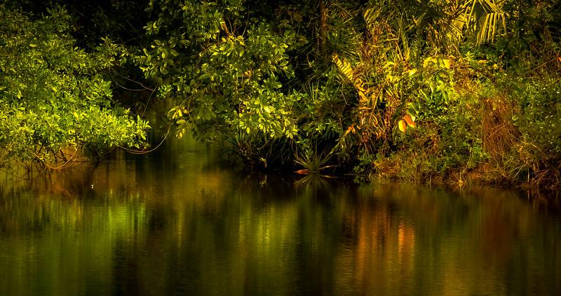 Leaves in the Light-057.jpg