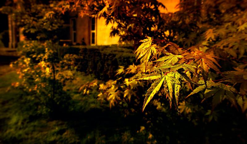 Leaves and Light-144.jpg