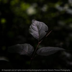 015-leaf-wdsm-16aug20-09x09-006-400-7589