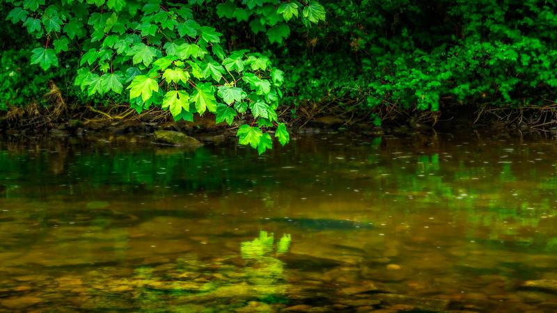 Leaves and Light-086.jpg