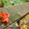 Maple Leaf on Rail