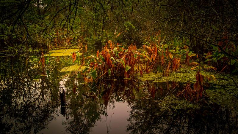 Leaves and Light-140.jpg