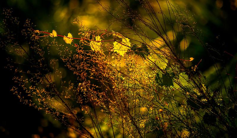 Leaves and Light-103.jpg