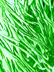 Oregon Sea Grass Green
