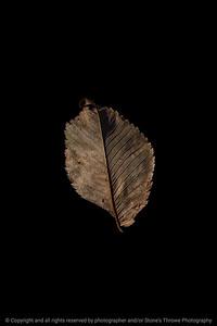 015-leaf-wdsm-16nov19-08x12-208-400-4679