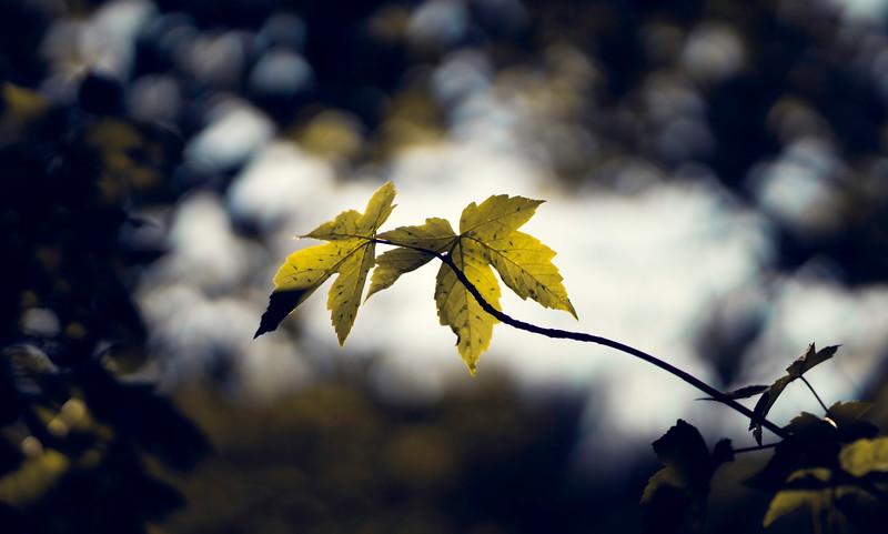 Leaves and Light-151.jpg