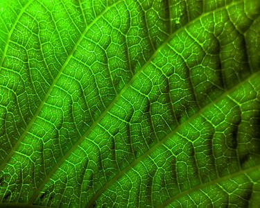 79 DSC02077 Green