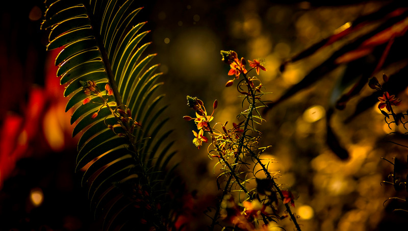 Leaves and Light-002.jpg