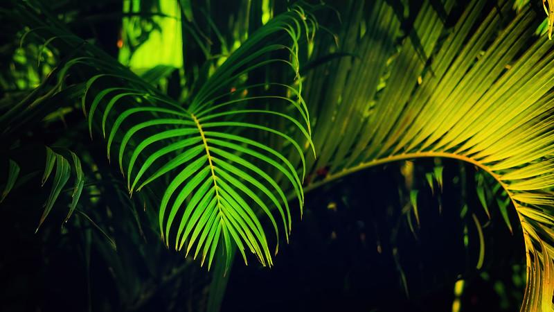 Leavces in the Light-056.jpg