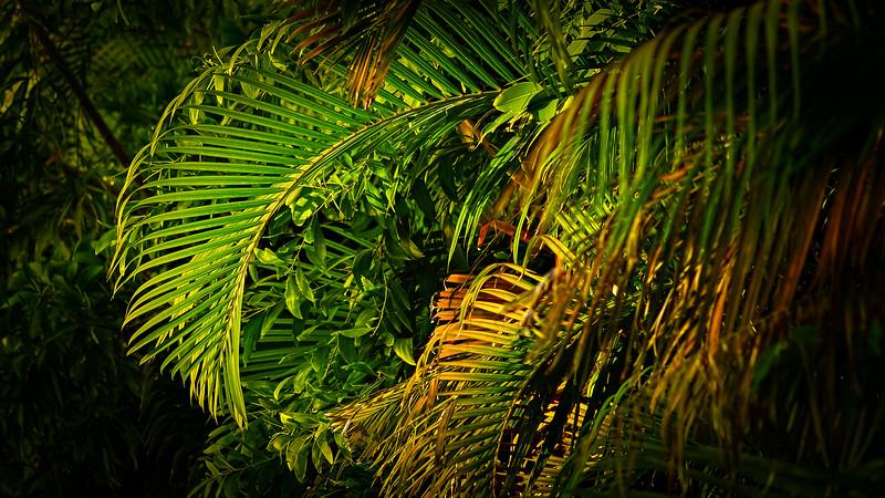 Leavces in the Light-052.jpg