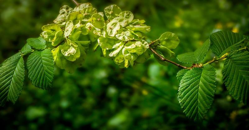 Leaves and Light-072.jpg