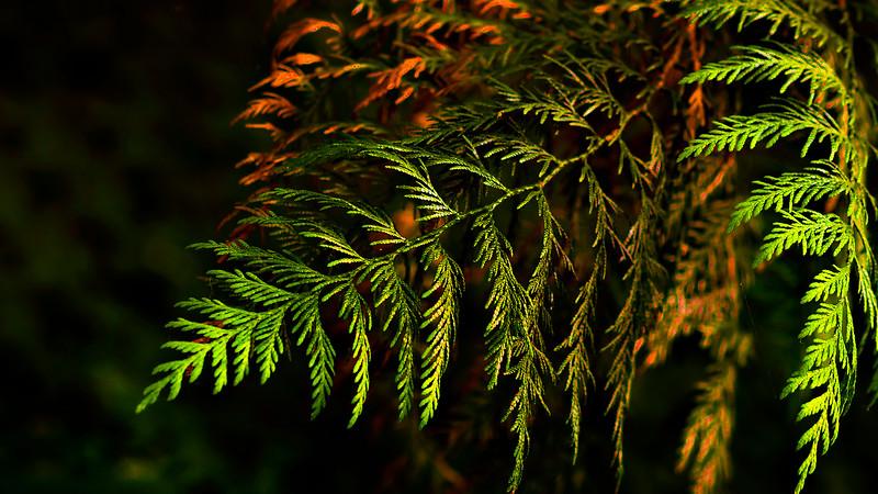 Leaves and Light-146.jpg