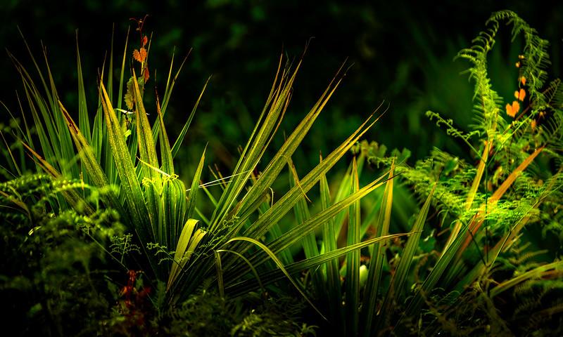 Leaves and Light-085.jpg