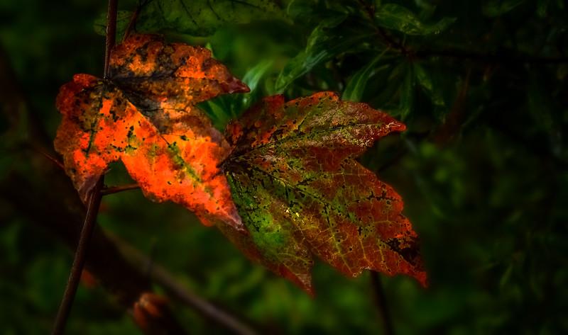 Leaves in the Light-065.jpg