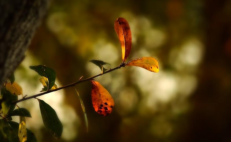 Leaves in the Light-069.jpg