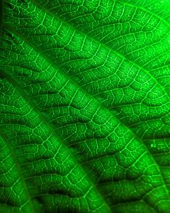79 DSC02077 Dark Green