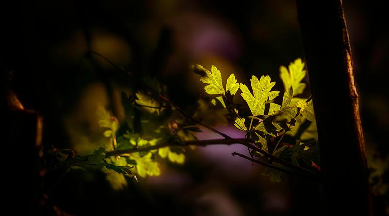 Leaves and Light-010.jpg