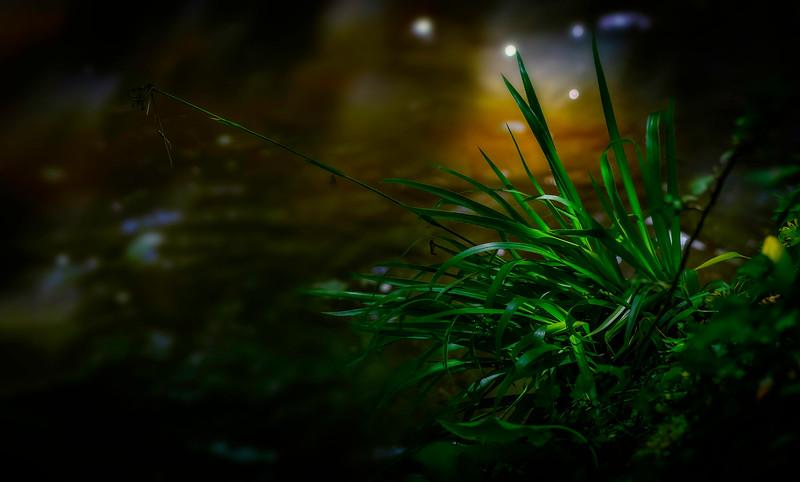 Leaves and Light-014.jpg