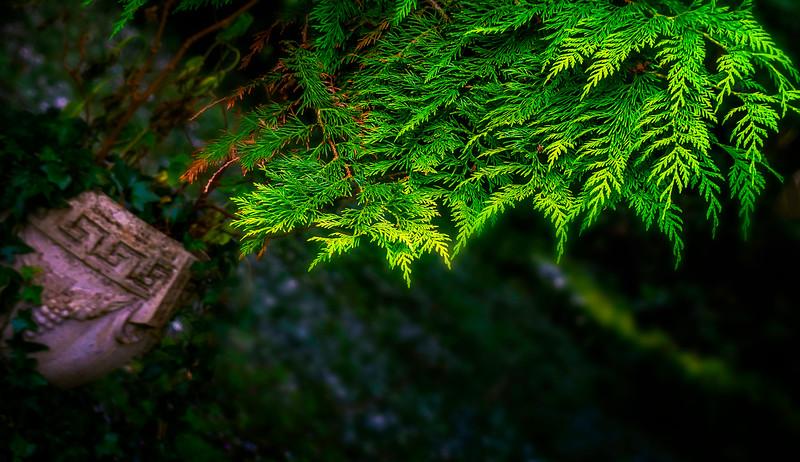 Leaves and Light-041.jpg