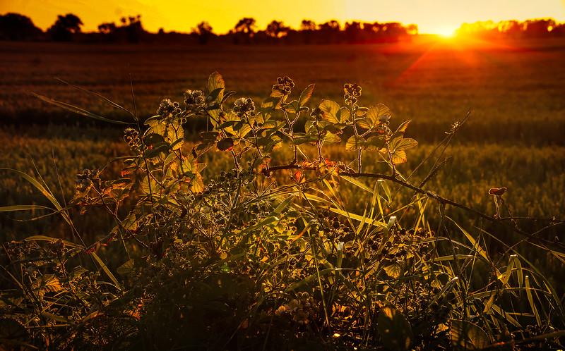 Leaves and Light-162.jpg