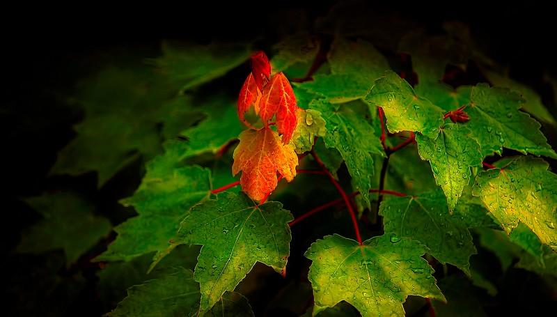 Leaves and Light-070.jpg