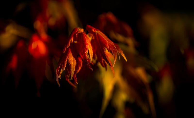 Leaves and Light-095.jpg