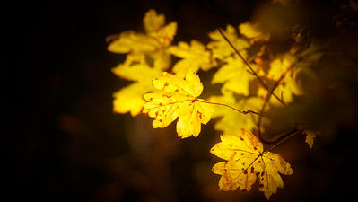 Leaves in the Light