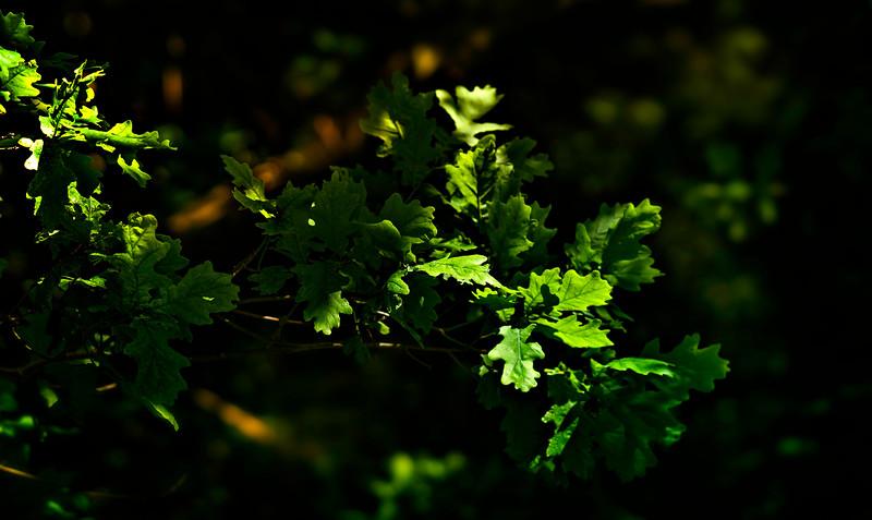 Leaves and Light-005.jpg