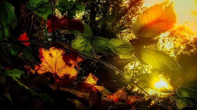 Leavces in the Light-033.jpg