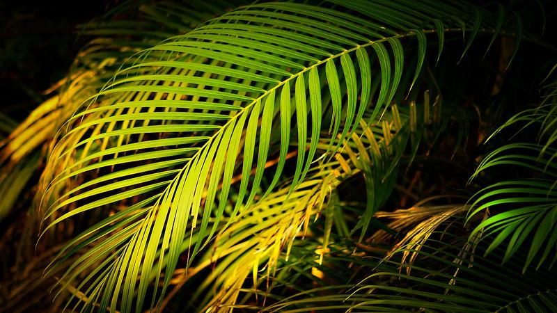 Leavces in the Light-051.jpg