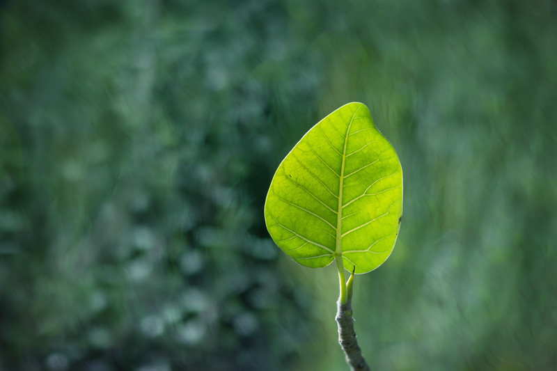 Green bokeh dreams