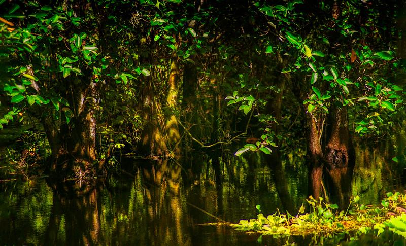 Leaves and Light-127.jpg