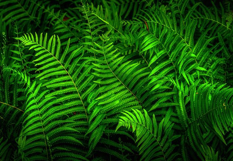 Leaves in the Light-064.jpg