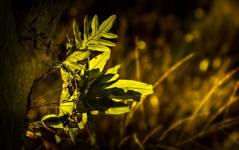 Leavces in the Light-040.jpg