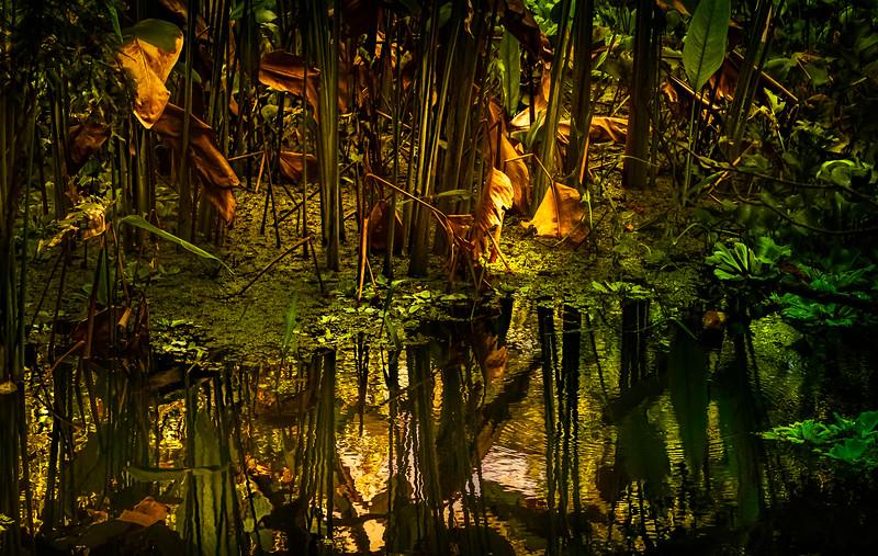 Leaves and Light-128.jpg