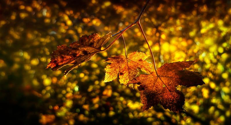 Leaves and Light-149.jpg