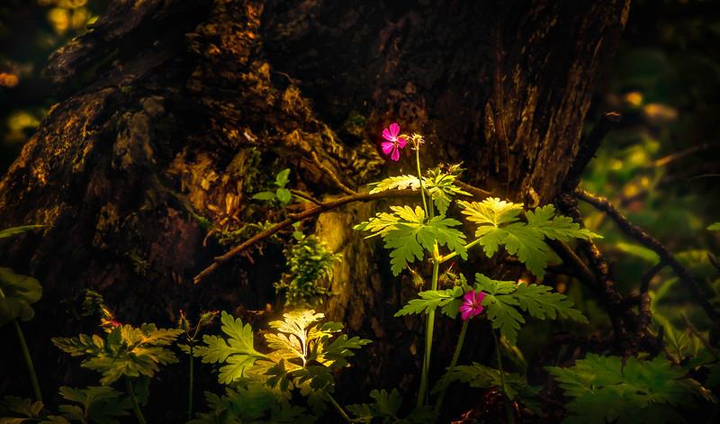 Leaves and Light-044.jpg