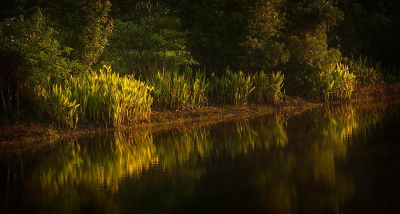 Leaves and Light-175.jpg