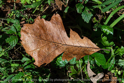 015-leaf_autumn-wdsm-23sep19-12x08-008-500-3414