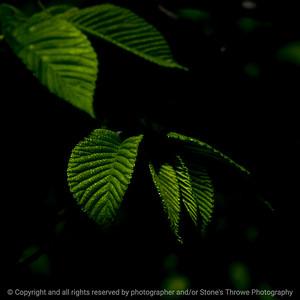 015-leaf-wdsm-03may16-09x09-206-8463