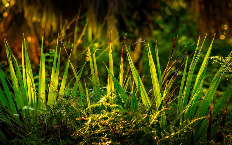 Leaves and Light-117.jpg