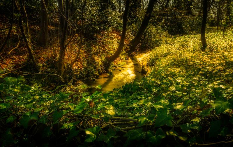Leaves and Light-007.jpg