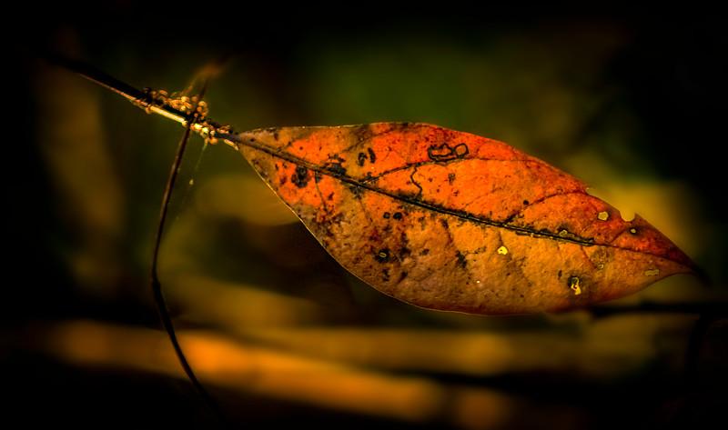 Leaves in the Light-045.jpg