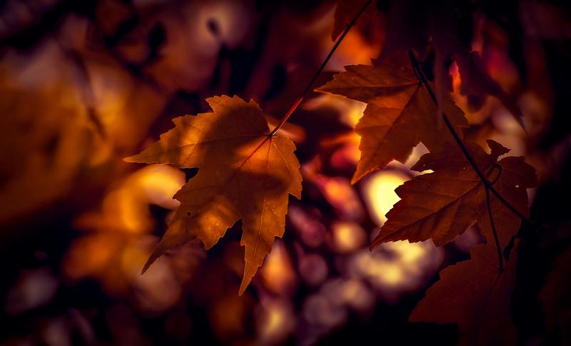 Leaves in the Light-056.jpg