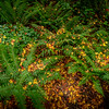 Ferns with Autumn Leaves